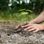 آرمانهای توسعۀ پایدار و سازمانهای مردمنهاد